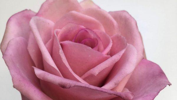 Cukorvirág rózsa készítő workshop